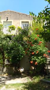 Chambres d'hotes/B&B Les Micocouliers : photos des chambres