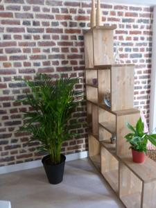 Appartement speculoos et chicoree : Appartement