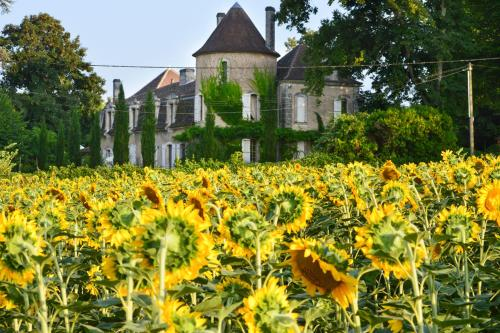 Saint-Martin-de-Riberac Chateau Sleeps 16 Pool WiFi : Hebergement proche de Saint-Vincent-de-Connezac